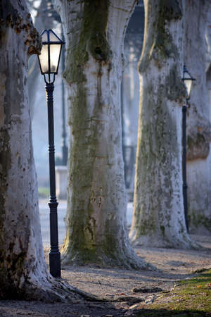 Beautiful early morning vista in Zrinjevac park, Zagreb, with old plane trees and historic lanterns. Stock Photo