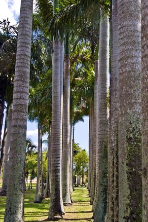 frowns: A row of palm trees in a tropical garden.