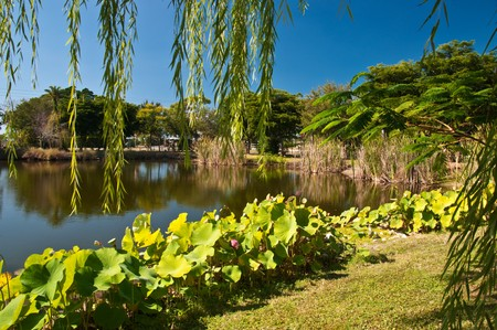 Tranquil tropical pond at Palma Solo Botanical Gardens photo