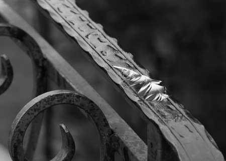 Fragment Iron railing close-up, black and white photo. Forged banister. Archivio Fotografico