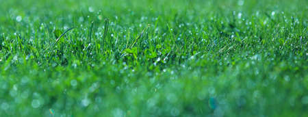 A drop of water on the grass close up. Abstract Natural blurred green background. For texture, background. Nature. Stock Photo