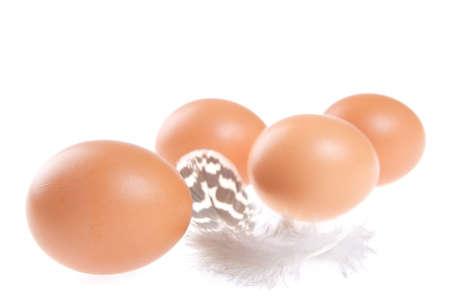 weightless: Huevos, plumas, alas, aves, vuelo, suave, fr�gil, ligero, Weightless, Shell, Motley, Brown Foto de archivo