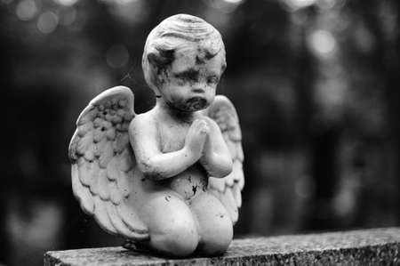 angel cemetery: Angel on the grave