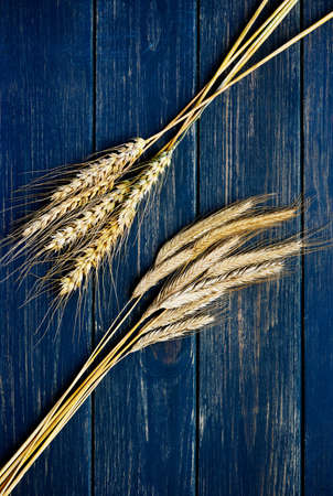 Two types of wheat on rustic navy blue wooden board photo