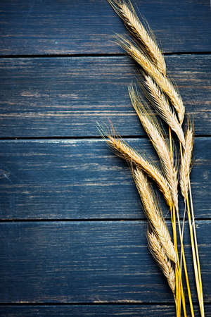 navy blue background: Golden wheat on navy blue rustic wooden board frame Stock Photo