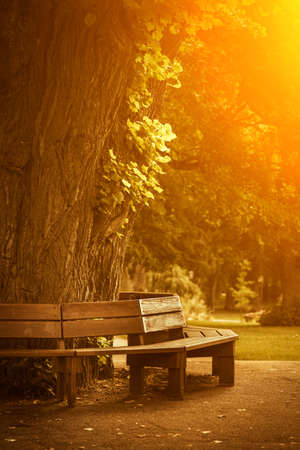 round chairs: Wooden bench in a peaceful quiet autumn park