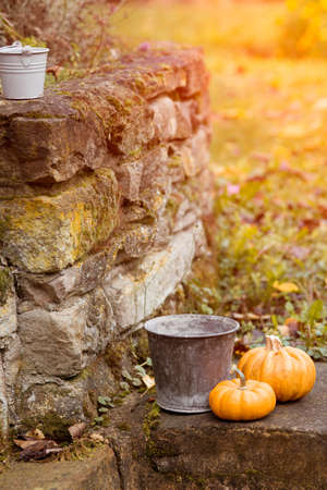 Two pumpkins and buckets in a back yard with dreamy warm toning photo