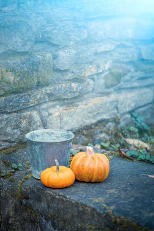 Two pumpkins and a bucket in a back yard with dreamy cold toning photo