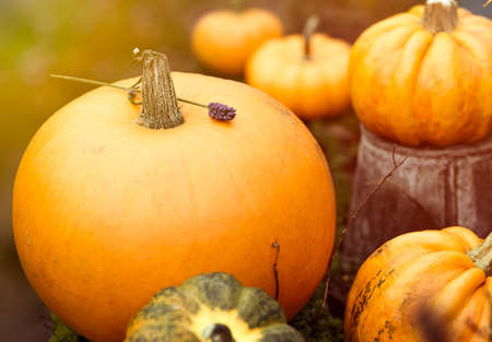 A group of beautiful pumpkins with vintage toning photo