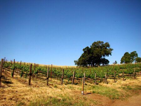 Vineyard Statue on horizon