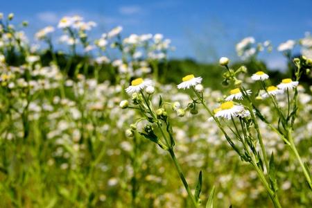 Wild flowers Imagens