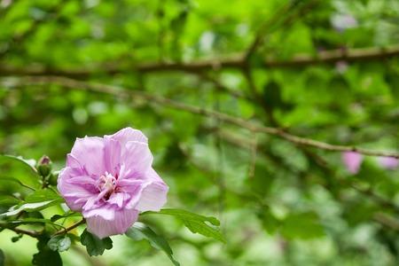 空間に木の花