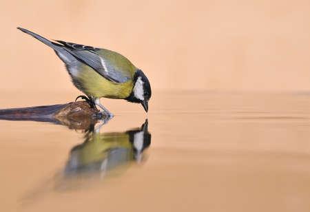 Bird drinking at the shore. photo