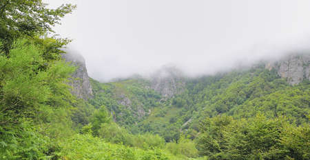 climatology: Mist in the beech forest.
