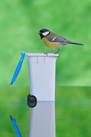 farrowed: Bird on a recycling bin.