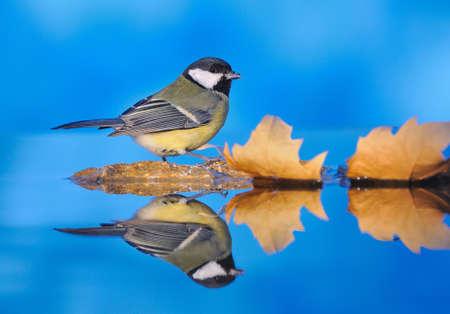 Bird on the water. photo