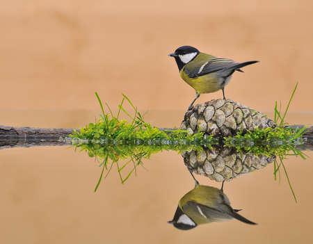 Bird on the water. Stock Photo - 10062478