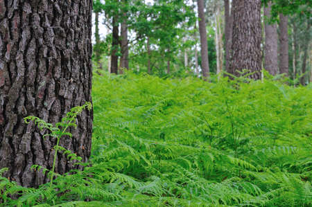 climatology: Ferns in the forest.