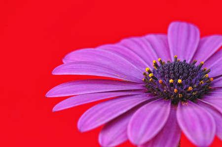 Daisy. photo