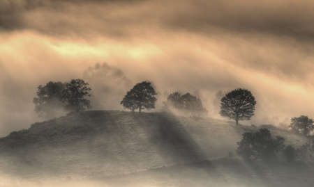 climatology: sunrise with mist in the forest.