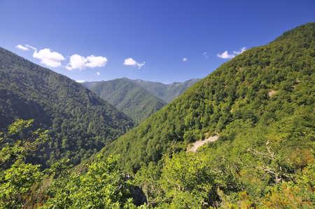 asturias: Forest Muniellos, Asturias, Spain. Stock Photo