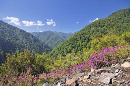 Forest Muniellos, Asturias, Spain. Stock Photo - 10062566