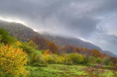 climatology: Autumn in the forest.