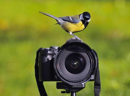calved: Photographing birds.