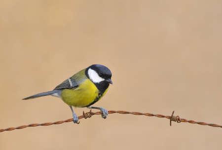 calved: Bird.