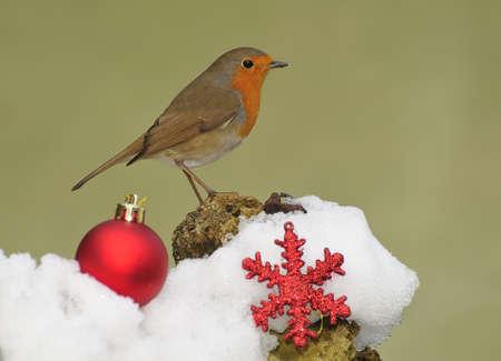 christmas robin: Christmas card. Stock Photo