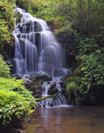 ferns: Waterfall in river. Stock Photo