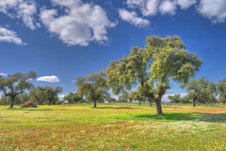 paisaje mediterraneo: La primavera en el pasto.