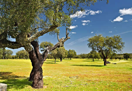 andalucia: Spring in the pasture. Stock Photo
