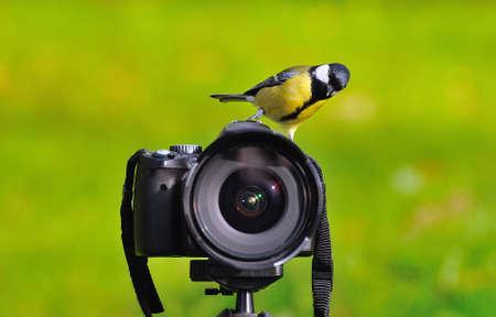 passerine: Uccello appollaiato su una macchina fotografica. Archivio Fotografico