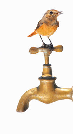 deforestation: bird perched on a faucet.