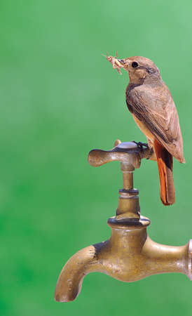 Bird perched on a faucet. photo