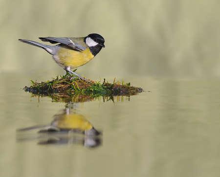 thirsty bird: Thirsty bird.