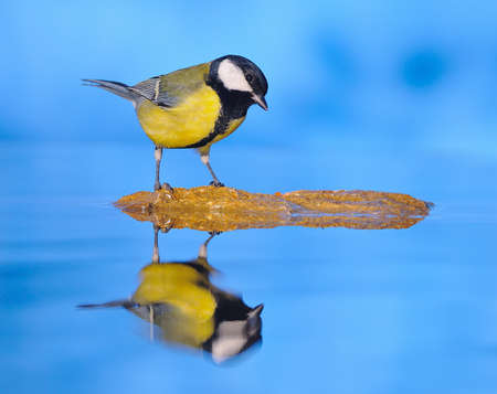 farrowed: Bird got into the water. Stock Photo
