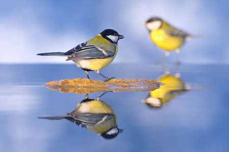 farrowed: Birds got into the water. Stock Photo