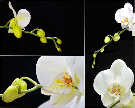 horticulturist: Orchids. Stock Photo