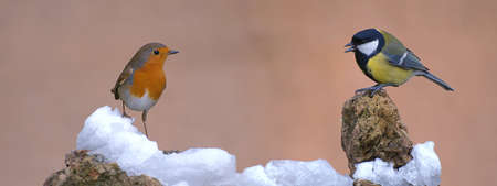 Robin and Great tit. Stock Photo - 10253520