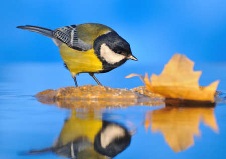 water birds: The coming of Autumn. Stock Photo