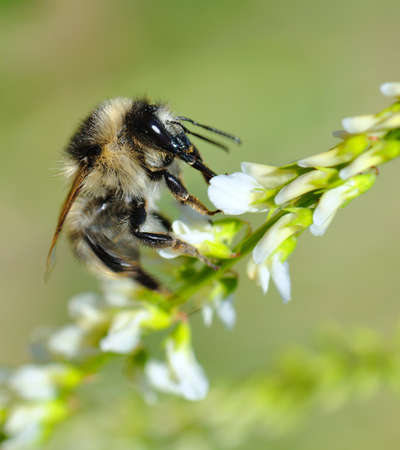 Bee. Stock Photo - 10376975