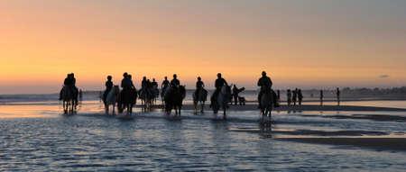 Horses on the beach. Stockfoto