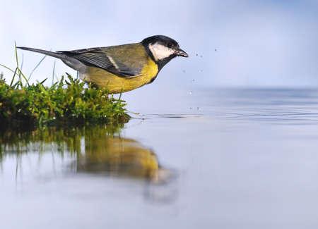 calved: Thirsty bird.