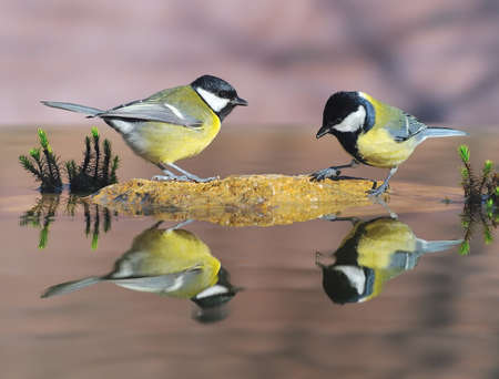 farrowed: Birds in the water.