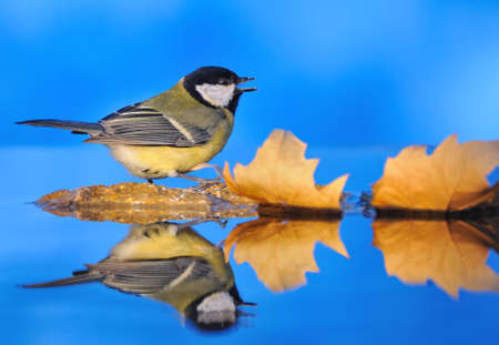 farrowed: Bird in the autumn. Stock Photo
