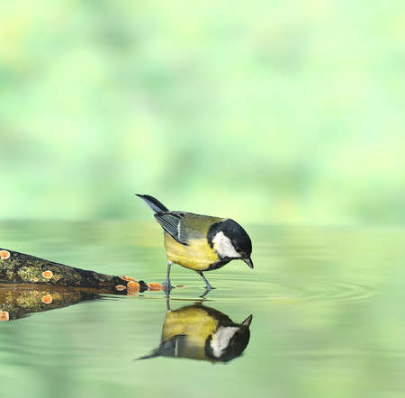 calved: Bird hunting on the water.