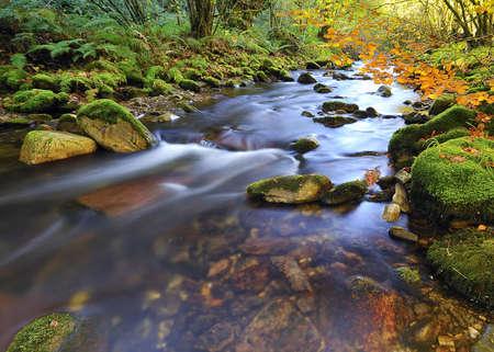 秋の森の中で。