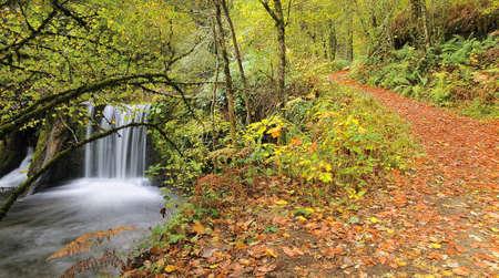 Walking through the woods in autumn. Stock Photo